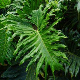 leaves-375610_1920