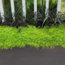 Outdoor Plants