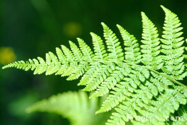 Image of fern plants