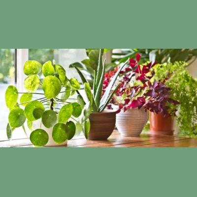 Your Guide to Indoor Plants