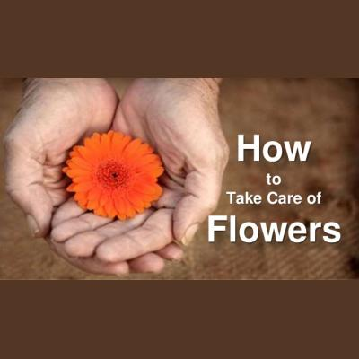 How to care for your Flowers and Plants