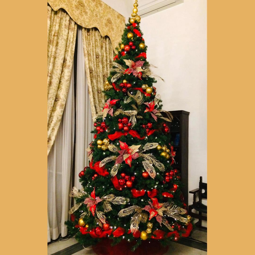 Traditional Christmas tree or not?